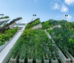 Refarmers-vegetation-verticale