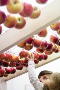 pommes-miit